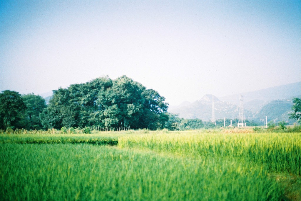 琐碎拼凑完美生活。微博@大林五姑娘-菲林中文-独立胶片摄影门户!