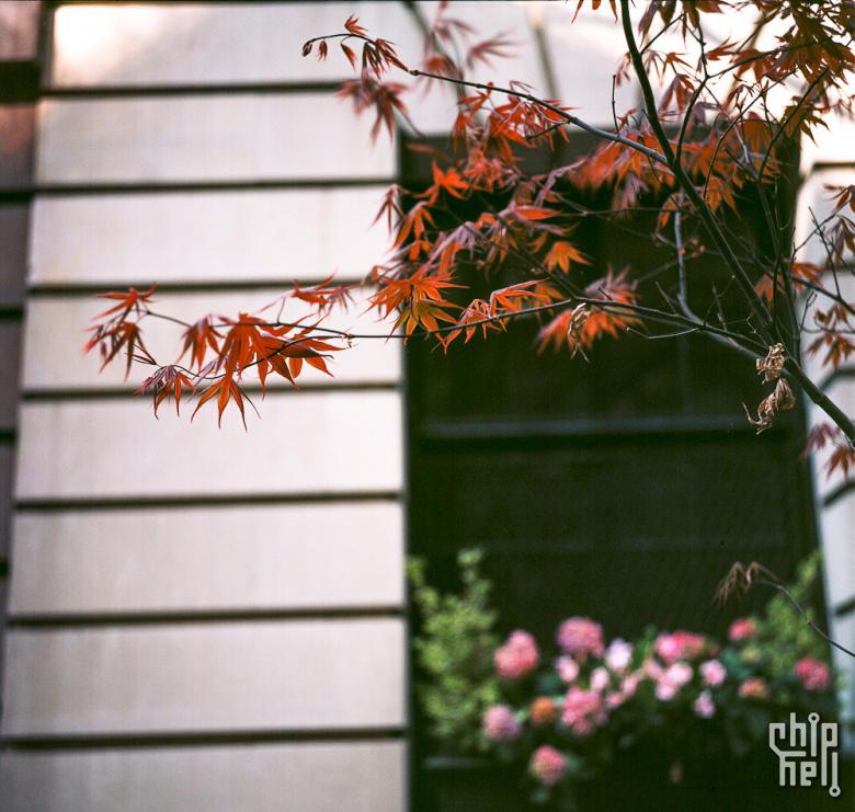 你对禄来到底有多少了解?Rolleiflex 3.5F White Face-菲林中文-独立胶片摄影门户!