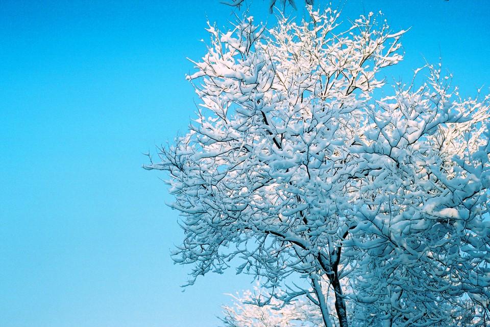 那场大雪 @xtaofilm-菲林中文-独立胶片摄影门户!