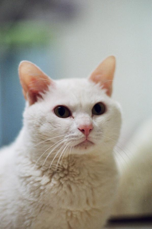 公主与猫-菲林中文-独立胶片摄影门户!