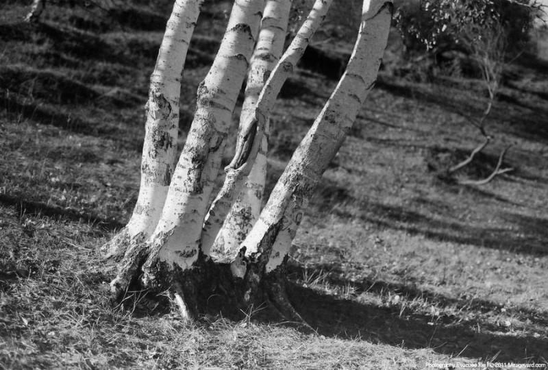 黑白深林-菲林中文-独立胶片摄影门户!
