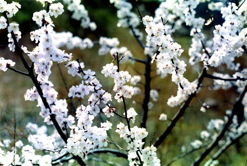 旅途中遇到的那些花花草草-菲林中文-独立胶片摄影门户!