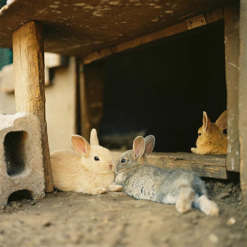 美奈子和可爱的小动物-菲林中文-独立胶片摄影门户!