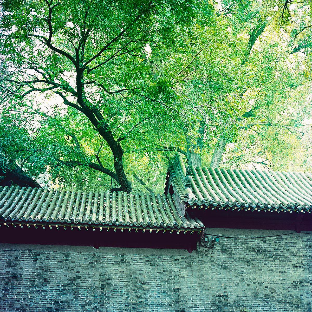 春风十里,不如你 @sparklee-菲林中文-独立胶片摄影门户!