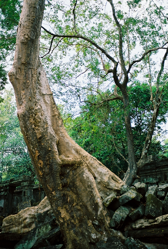 The trip of Angkor