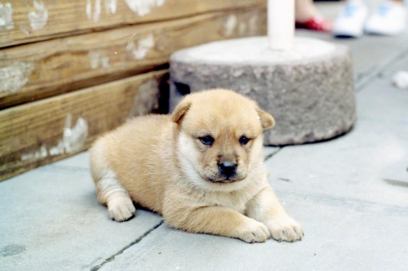 一窝小狗-菲林中文-独立胶片摄影门户!
