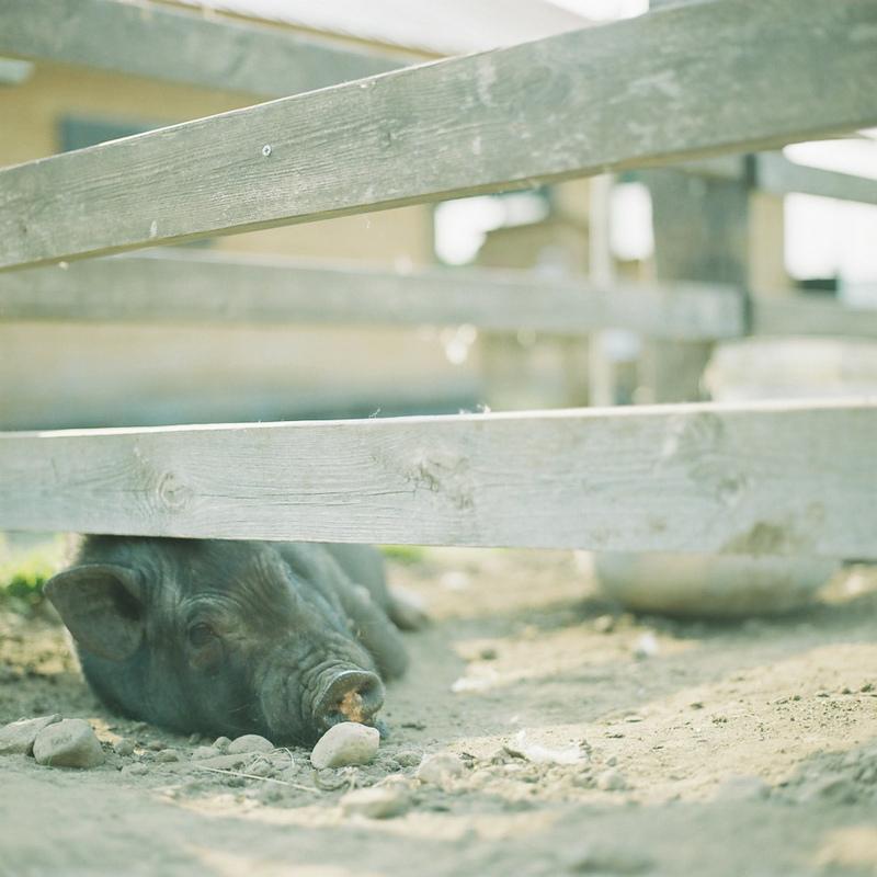 田园生活-菲林中文-独立胶片摄影门户!