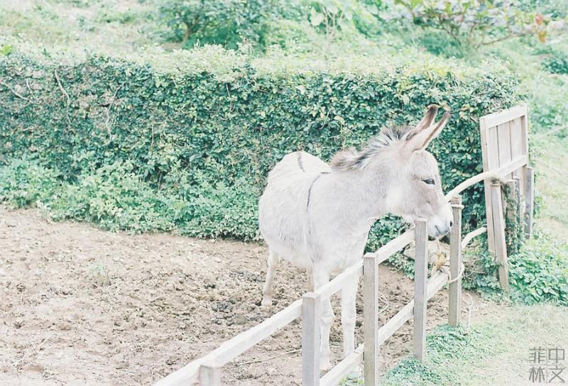 夏日小清新-菲林中文-独立胶片摄影门户!