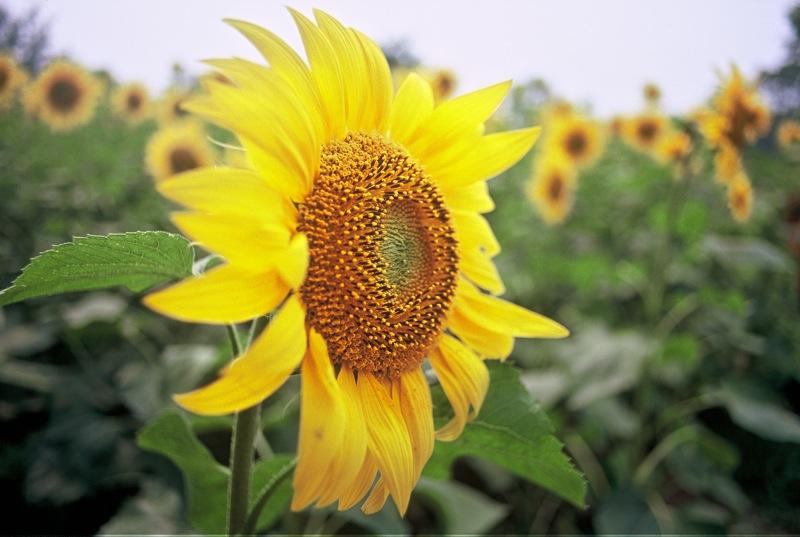 夏日北京-菲林中文-独立胶片摄影门户!
