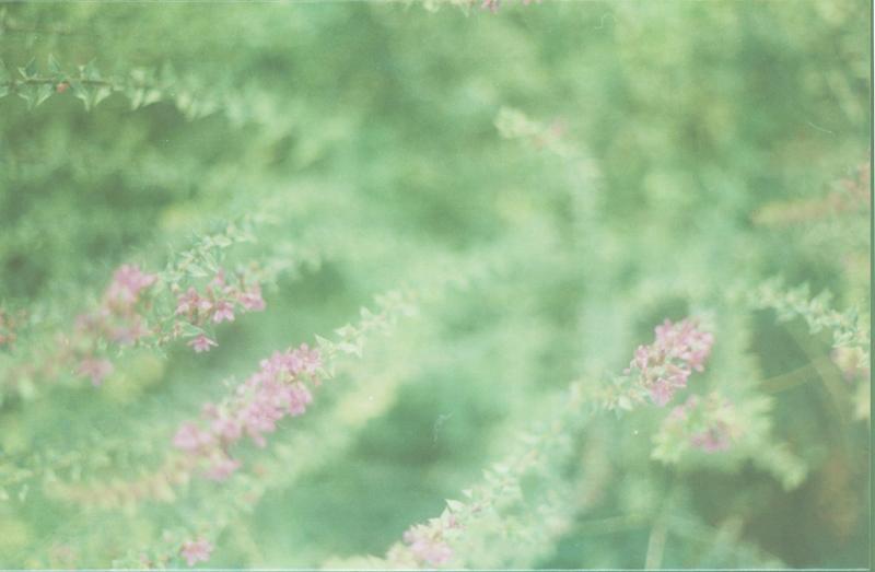 那些个有些模糊的片段-菲林中文-独立胶片摄影门户!