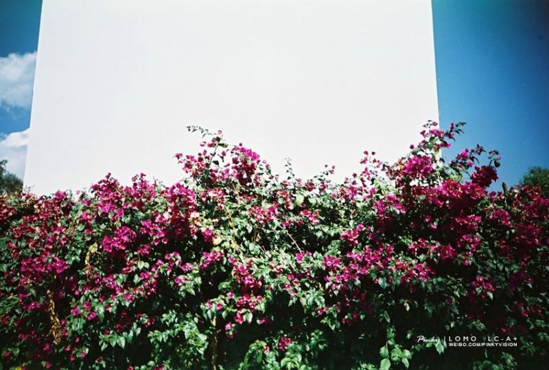 边角云南-菲林中文-独立胶片摄影门户!