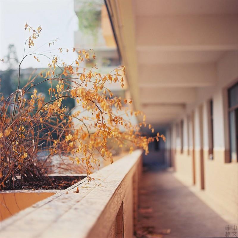 废弃的小学校园-菲林中文-独立胶片摄影门户!
