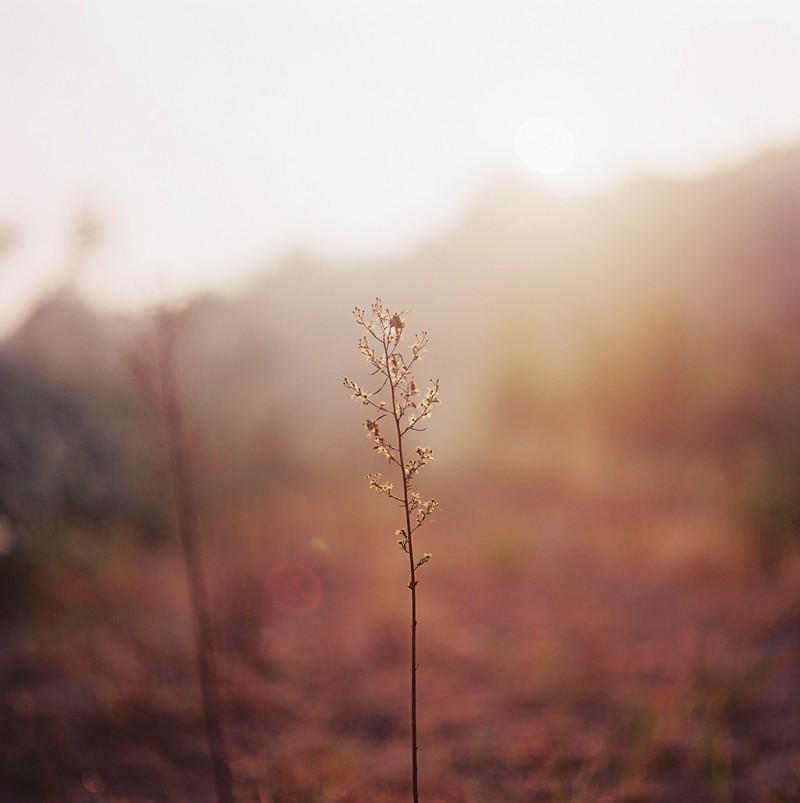 最近的一些小清新-菲林中文-独立胶片摄影门户!