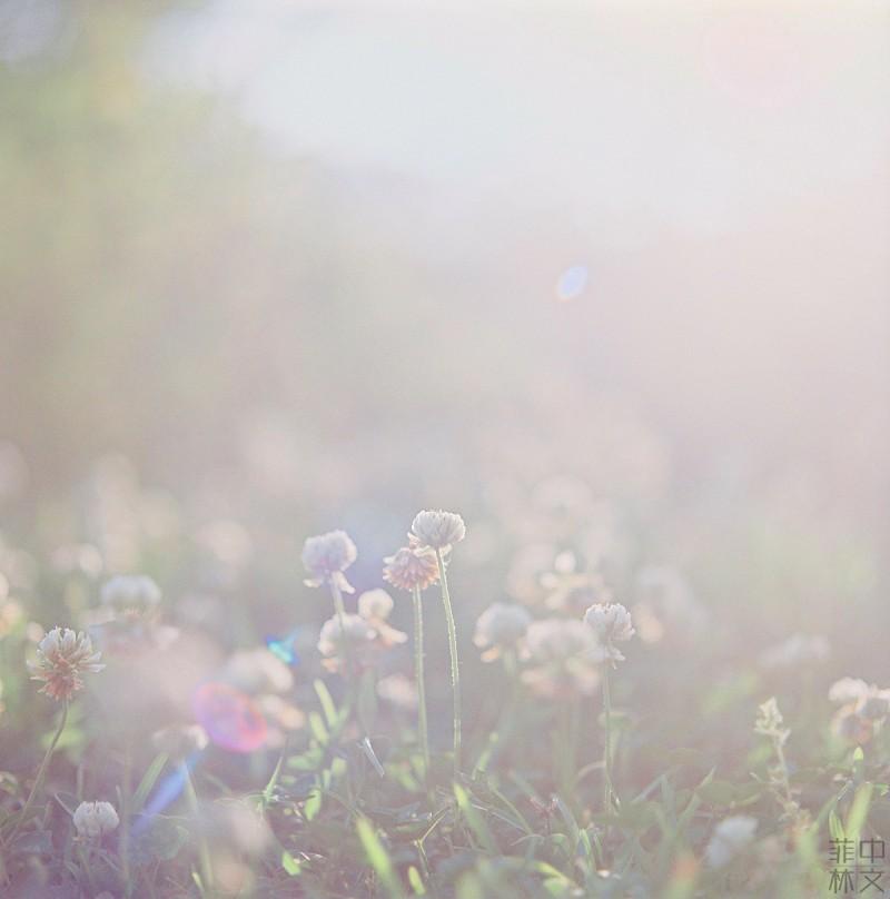 阳光清晨-菲林中文-独立胶片摄影门户!
