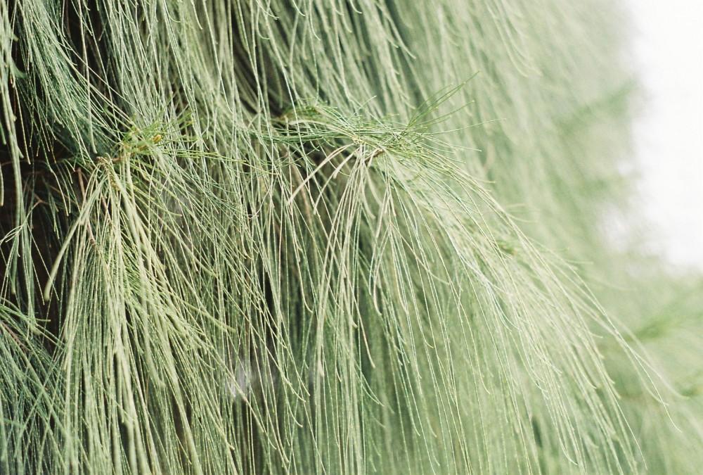 广西药用植物园 @一棵风花树-菲林中文-独立胶片摄影门户!