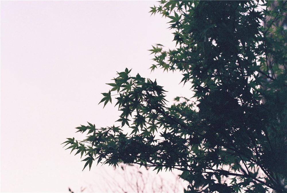 初投-日常瞎拍@小池_Lucille-菲林中文-独立胶片摄影门户!