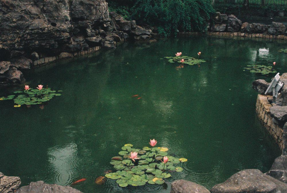 夏天,胶片,记录,风景篇  @调调哥哥嗨你好-菲林中文-独立胶片摄影门户!
