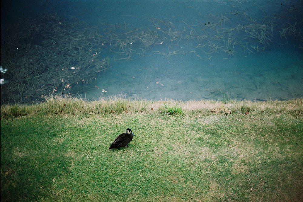 用Canon AE-1第一次出来的成果 @只是个有理想的青瓜-菲林中文-独立胶片摄影门户!