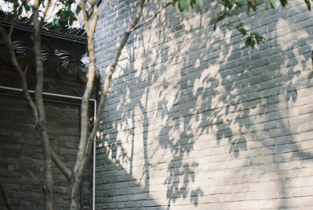 第一次洗出来的三卷胶卷@鲜柠汁桃仁宫保豪虾球配咸鱼-菲林中文-独立胶片摄影门户!